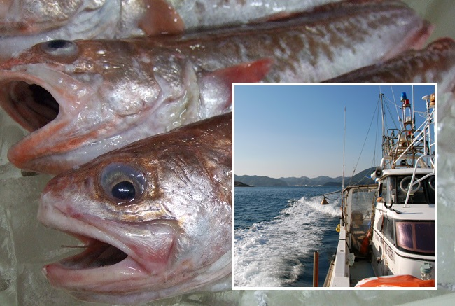 IT企業が魚の流通に参入!漁師さんの獲れたて魚ネット直販