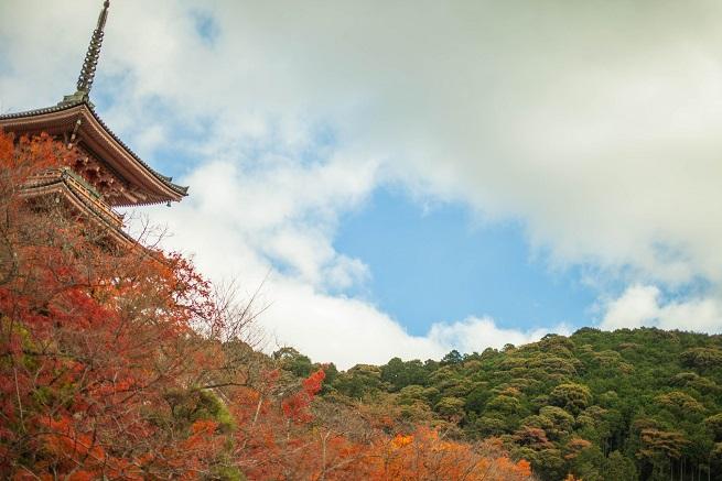 秋の京都、東寺の紅葉