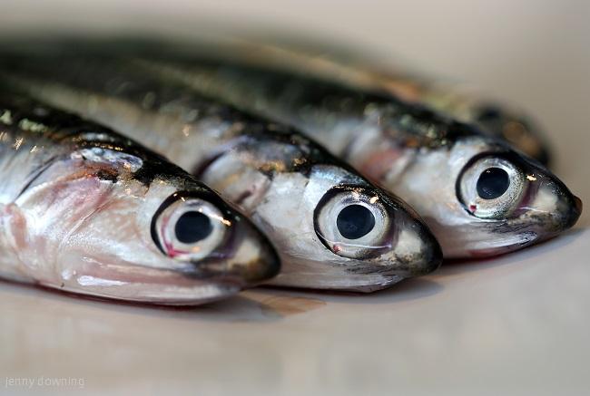 安くて美味しい!捨てちゃう魚が大活躍♪
