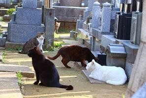お墓について~女性の意識変化に伴う墓問題