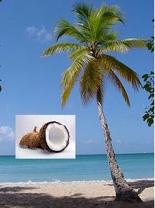 ココナッツはココヤシの実です。ココナッツオイルが取れます。